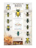 Insects & Bugs Charts