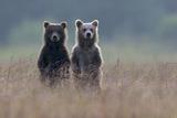 Animals Natl. Geo.