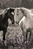 Animals (Spot Color Photography)
