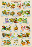Amphibians by Species