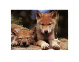 More Wild Animals...