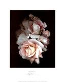 S. G. Rose