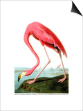 John James Audubon (Bridgeman)