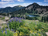 National Forests