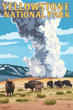 Buffalo & Bison