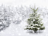 Forest Snowscapes
