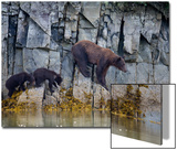 National Geographic Art on Acrylic