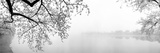 Trees (Panoramic Images)