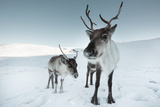 Deer (Nature Picture Library)