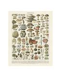 Botanical by Species