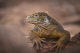 Reptiles Natl. Geo.