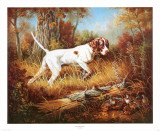 Pointer with Quail