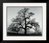 Oak Tree  Sunset City  California  1932