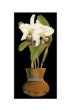 Orchids in Pot I