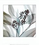 Eucalyptus Reproduction d'art par Steven N. Meyers