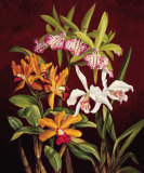 Orchid Trio II