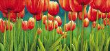 Fra i Tulipani