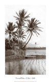 Coco Palms  Oahu  1926