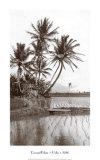 Coco Palms  Oahu  1926