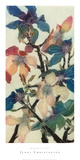 Magnolias XIII
