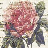 Carte Postale Rose III