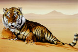Tiger in Sand
