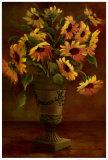 Mediterranean Sunflowers I
