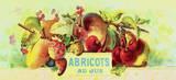 Abricot au Jus Reproduction d'art