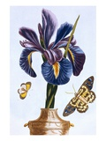 18th Century French Print of Common Iris With Butterflies
