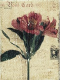 Postcard and Flower
