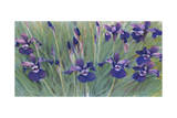 Irises by Kirsten Soderlind
