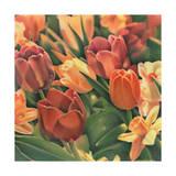 Tulips by Kirsten Soderlind
