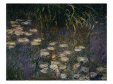 Detail of Waterlilies from The Morning