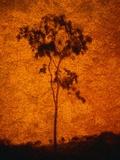 Orange Sky Behind Tree