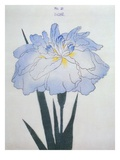 U-Chu Book of a Light Blue Iris