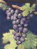 Cabernet Franc Cluster