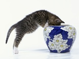 Kitten Looking in Decorated Vase