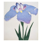 Kaku Jaku Ro Book of a Blue Iris