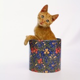 Kitten Sitting in Flowered Cookie Tin
