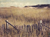 Cape Cod Sandunes