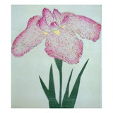 Tanka No-Koe Book of a Pink Iris