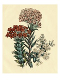 Illustration of Leafy and Colorful Flowers