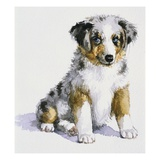 An Australian Shepherd Puppy from My Puppy&#39;s Record Book