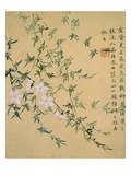 Flowers  from an Album of Ten Leaves
