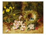A Primrose and Birds Nest on a Mossy Bank