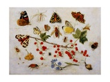 Still Life with Butterflies  Moths and Redcurrants