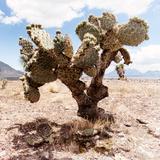 ¡Viva Mexico! Square Collection - Cactus III
