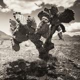 ¡Viva Mexico! Square Collection - Cactus I