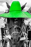 ¡Viva Mexico! B&W Collection - Portrait of Horse with Green Hat