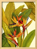 Tropical Bird of Paradise